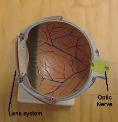 EyeInteriorSmall
