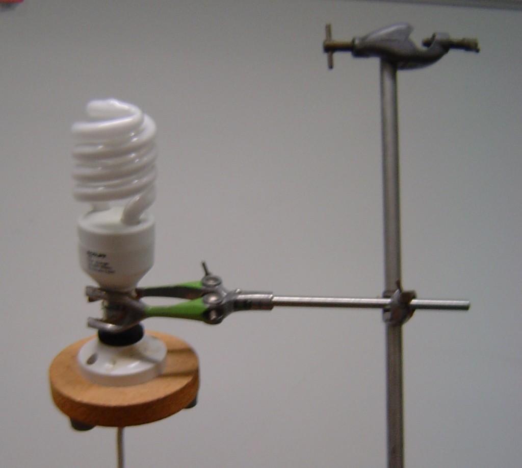 Bulb close-up
